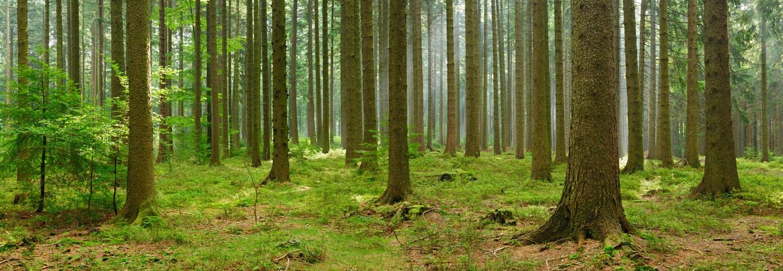 skup drewna z podlaskiego tartaku consultor